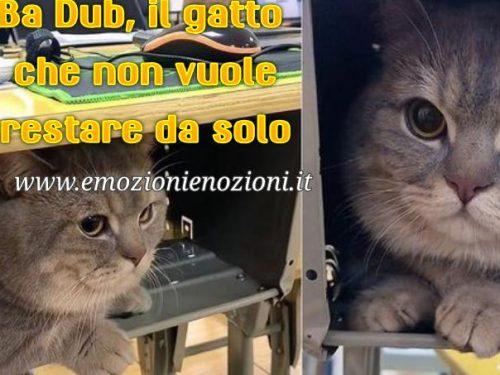 Ba Dun, il gatto che studia  nascosto sotto il banco