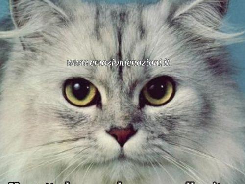 Immagini, buongiorno, buonanotte: Un gatto ha un solo scopo nella vita: donare il suo cuore