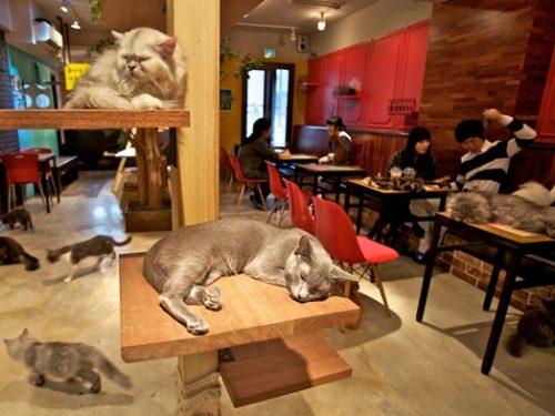 Café catgarden: il luogo perfetto per gli amanti dei gatti