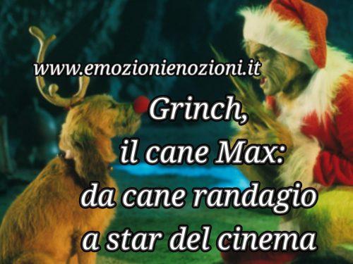 Grinch, il cane Max: da cane randagio a star del cinema