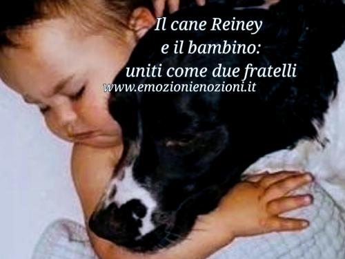 Il cane Reiney e il bambino: uniti come due fratelli