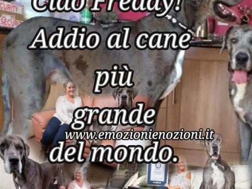 Freddy, ciao: addio al cane record