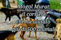Mogol Murat: il corriere che aiuta gli animali