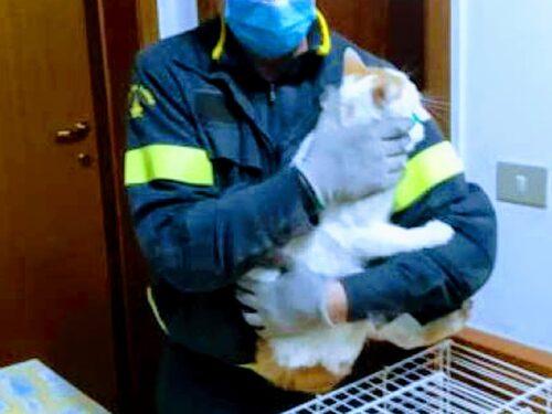 Gatto salvo: dopo 3 giorni nella canna fumaria