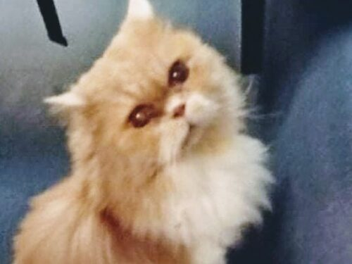 Gattina cacciata dal treno: Aidaa lancia un appello