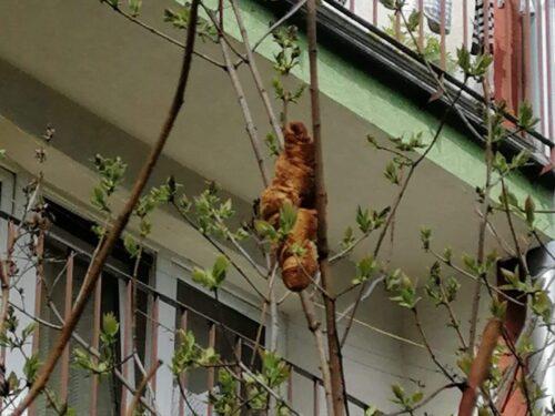 Croissant scambiato per un cucciolo su un albero