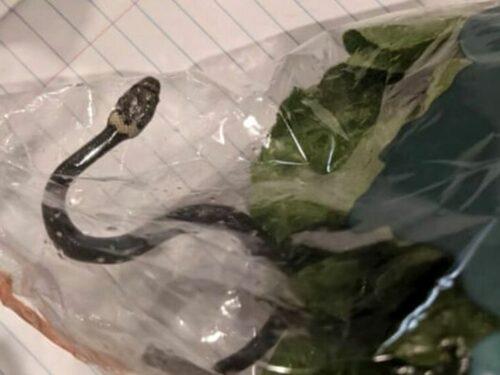 Cibo: busta dell'insalata con sorpresa