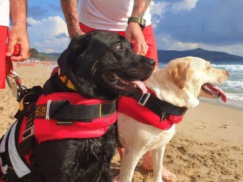 Cani eroi salvano una ragazza che stava annegando