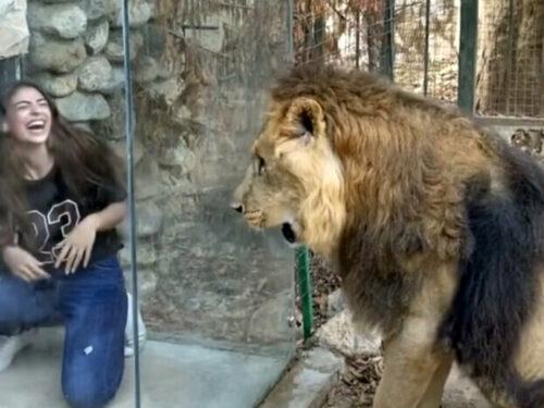 Social network: un selfie per umiliare un leone