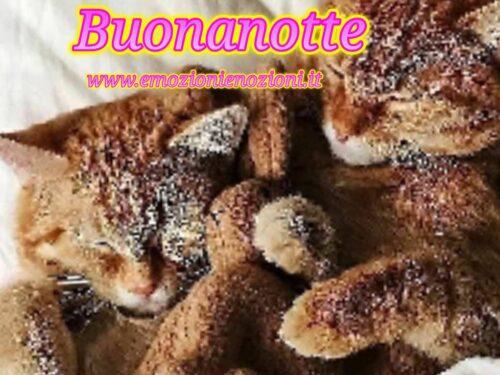 Gatti! immagini: buonanotte per dire ciao